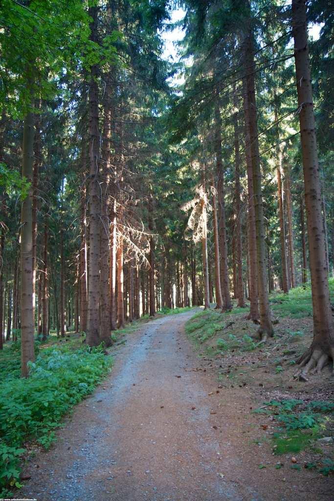 auf dem Lärchenweg folgen wir dem Liederweg in Geyer
