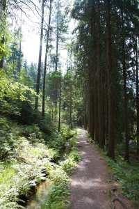 die Natur geniessen am Röhrgraben im greifenbachtal